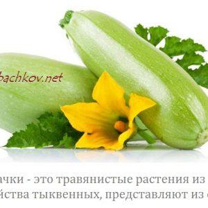 кабачки с цветком